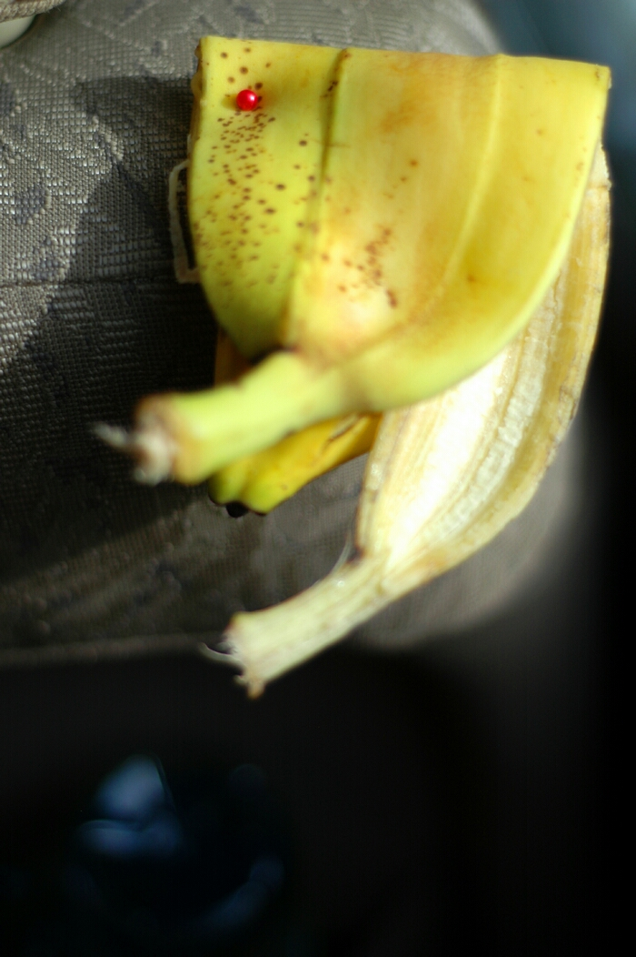 pinned banana