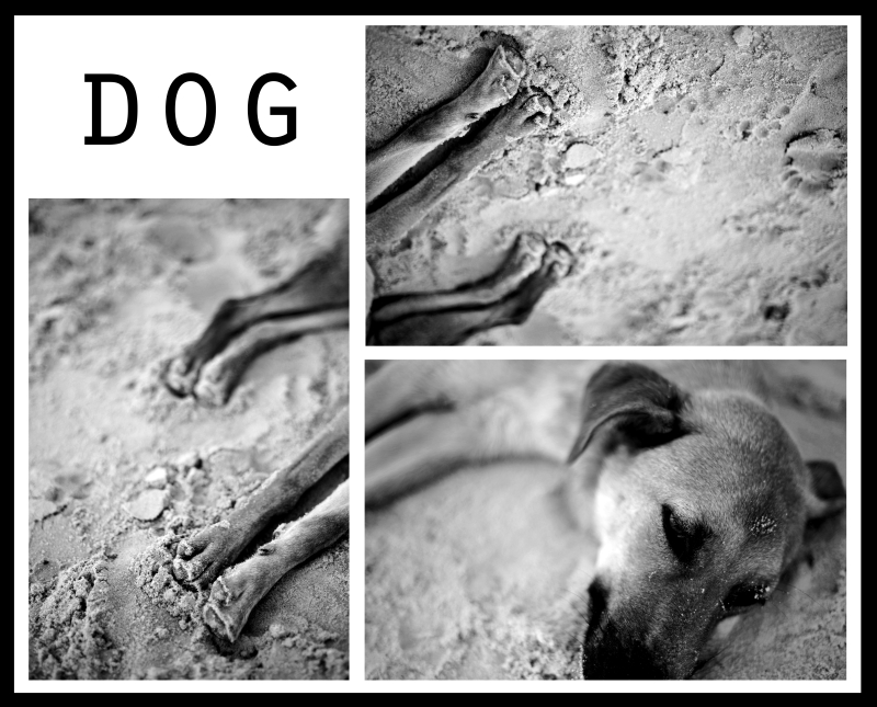 dog. in black and white