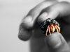 hermit crab and black and white hand